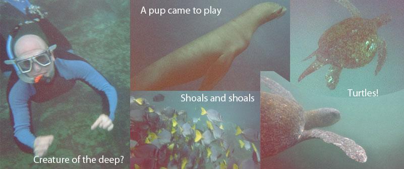 02-05-snorkeling